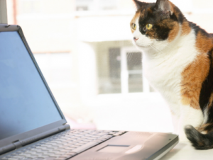 2018 Hills Innovation Series –  Cracking the Cat Owner Code