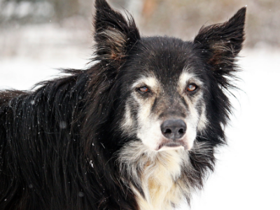 Geriatric Nutrition: Do old dogs and cats need new tricks?