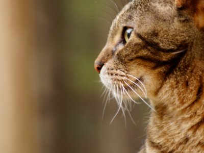 Practical Tips to Improve Crazy Cat Client Relationships From One Crazy Cat Doctor