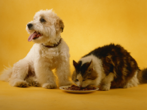 Management of Diabetes in Canine and Feline Patients