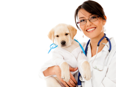 The Cost of Caring: Compassion Fatigue and Veterinary Technicians
