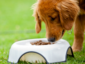 Chronic Kidney Disease: Feeding Our Finicky Furry Friends