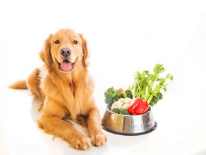What's your Plan for Recommending Pet Food?